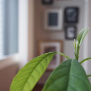 ●植物●リビングのグリーン
