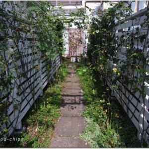 バラの管理と庭づくり、アーチとゲート。 入間市のガーデンより