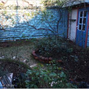 バラの庭の冬作業。アトリエガーデンより