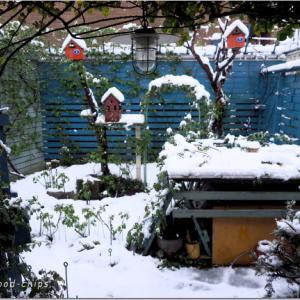 バラの庭と春の雪。