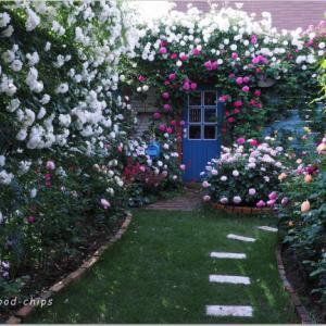 バラを楽しむ庭づくり、春の風景。7つの空間より #26