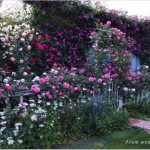 バラを楽しむ庭づくり、春の風景。7つの空間より #27
