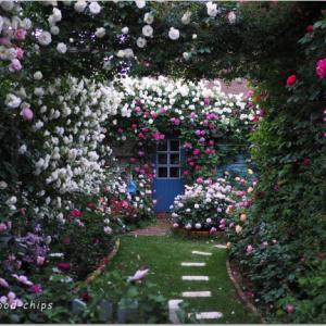 バラを楽しむ庭づくり、春の風景。7つの空間より #30