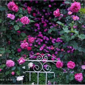 バラを楽しむ庭づくり、春の風景。7つの空間より #35