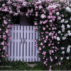 バラを楽しむ庭づくり、春の風景。7つの空間より #36