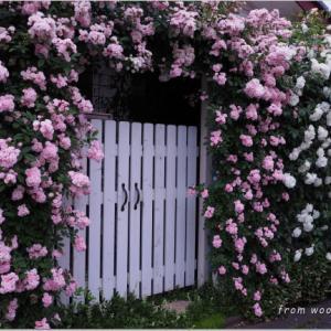 バラを楽しむ庭づくり、春の風景。7つの空間より #39
