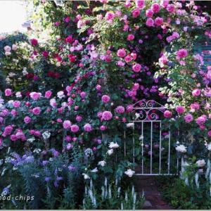 バラを楽しむ庭づくり、春の風景。7つの空間より #41