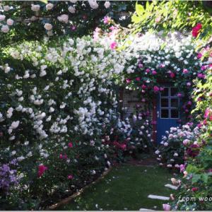 バラを楽しむ庭づくり、春の風景。7つの空間より #42