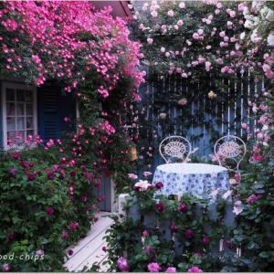 バラを楽しむ庭づくり、春の風景。7つの空間より #43