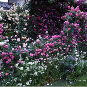 バラを楽しむ庭づくり、春の風景。7つの空間より #44