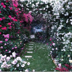 バラを楽しむ庭づくり、春の風景。7つの空間より #46