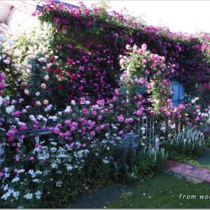 バラを楽しむ庭づくり、春の風景。7つの空間より #48