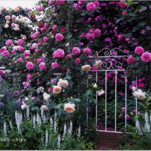 バラを楽しむ庭づくり、春の風景。7つの空間より #51