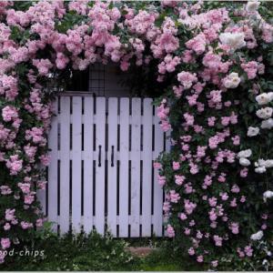 バラを楽しむ庭づくり、春の風景。7つの空間より #52