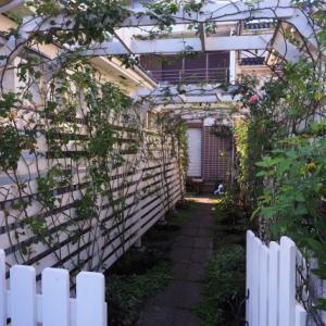 バラの庭仕事、状態を整える秋の管理。 入間市のガーデンより