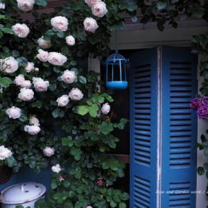 バラを楽しむ庭づくり、春の風景。7つの空間より #71
