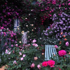 バラを楽しむ庭づくり、春の風景。7つの空間より #72