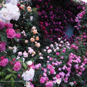 バラを楽しむ庭づくり、春の風景。7つの空間より #73