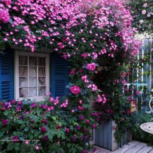 バラを楽しむ庭づくり、春の風景。7つの空間より #74