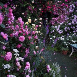 バラを楽しむ庭づくり、春の風景。7つの空間より #75