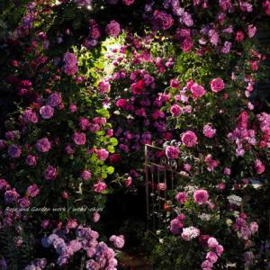 バラを楽しむ庭づくり、春の風景。7つの空間より #76
