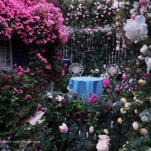 バラを楽しむ庭づくり、春の風景。7つの空間より #77