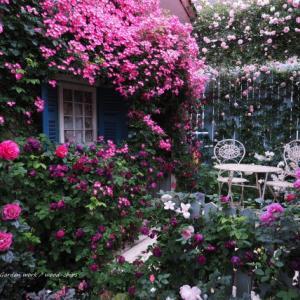 バラを楽しむ庭づくり、春の風景。7つの空間より #78