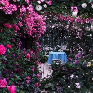バラを楽しむ庭づくり、春の風景。7つの空間より #81