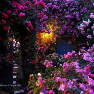 バラを楽しむ庭づくり、春の風景。7つの空間より #83