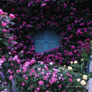 バラを楽しむ庭づくり、春の風景。7つの空間より #84