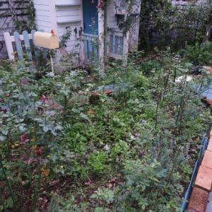 バラの管理作業(カミキリムシの幼虫駆除)・杉並区のガーデンより