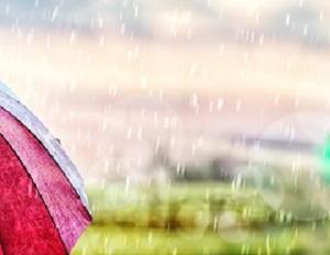 雨の日に見つけるものは