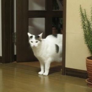 2代目デブ猫