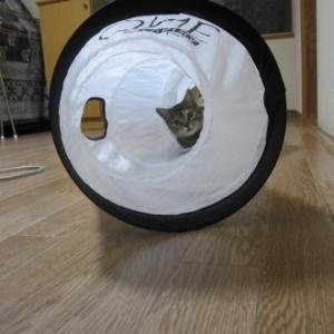 トンネル猫