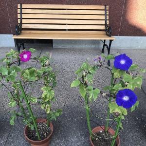 庭作り38日本庭園編⑮・・上流部をいじる。
