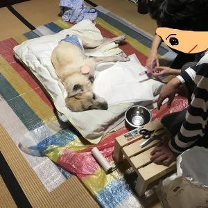おじい犬の晩年記録・・・23(介護ノウハウ伝授)