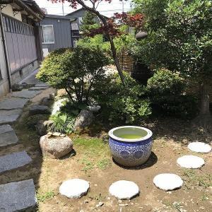 庭作り72日本庭園編(28)・・メダカ鉢の水の入れ替え。