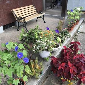 庭作り92玄関前エリア⑤・・小さな喜び。