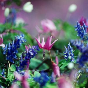 春の野草とシマエナガ^^