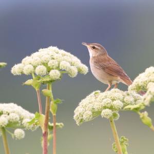 道北の花と野鳥