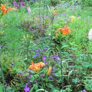 夏の裏庭NOW
