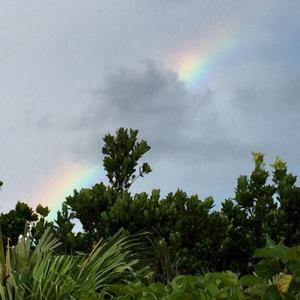 虹とフルーツサンド