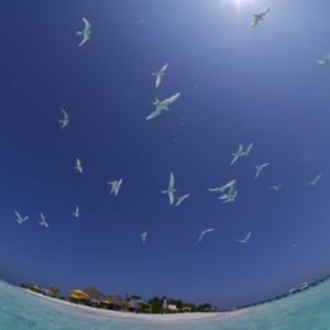 沖縄県の観光受入方針についての発表を受けて