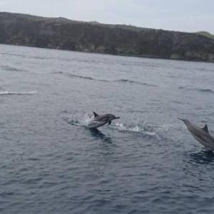 イルカのち豪雨