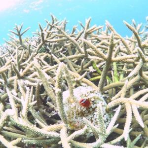 サンゴと地形