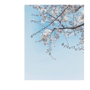 レッスン状況とこの春更新したアクセサリーについて*
