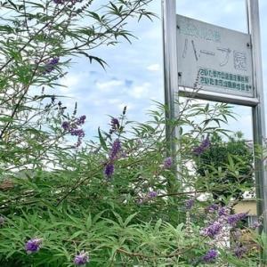 見沼氷川公園ハーブ園