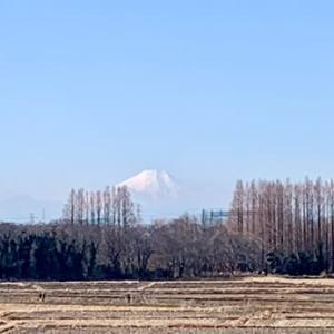 秋ヶ瀬の土手から富士山