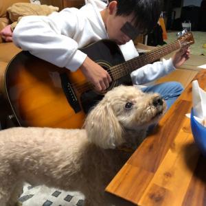 今でも音叉でチューニングしてるギタリストっているんやろか?