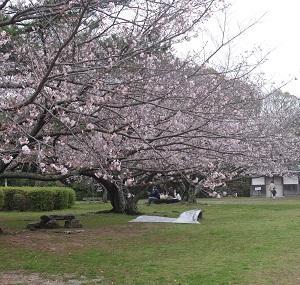 平草原公園 桜まつり